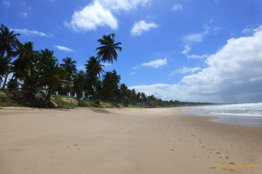 palmengesäumter Sandstrand Praia do Forte - so weit das Auge reicht