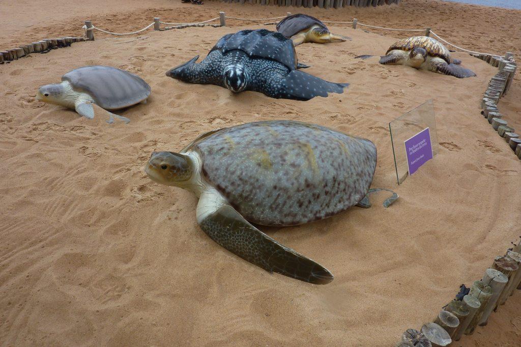 Nachbildungen verschiedener Schildkröten