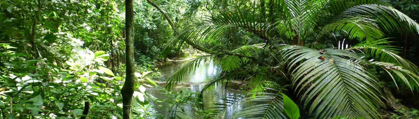 Mitten im Dschungel von Mexiko