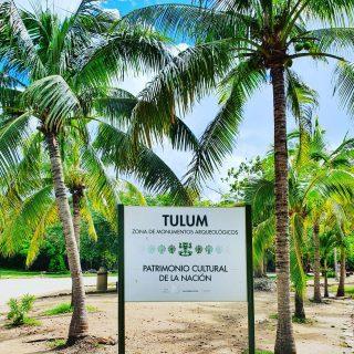 Tulum, kurz vor dem Einfang zu den Ruinen.😍😍😍 . . . #tulumruins #tulummexico #tulumruinas #tulum #ruinasmayas #ruinas #ruins #ruinen #palmen #palms #palmera #mayaculture #mayaruins #maya #zonaarcheologica #entdecken #besichtigen #reiseblog #reisebloggerin #travelgram #travelphotography #martinasreisewelt