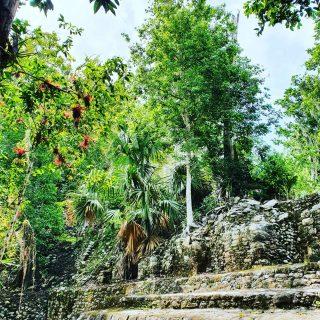 Pflanzen und Bäume überwuchern einstige Gebäude der Maya. In Coba ist gut zu sehen, wie sich die Natur ihren Platz zurückerobert hat.🌿🌿🌿🌿🌿🌿🌿🌿🌿🌿🌿 . . . #coba #cobá #cobamexico #mayaculture #mayaruins #maya #mayas #culturamaya #quintanaroomexico #yucatanpeninsula #instagood #instamex #instamexico #mexikoreise #mexikoreise #martinasreisewelt