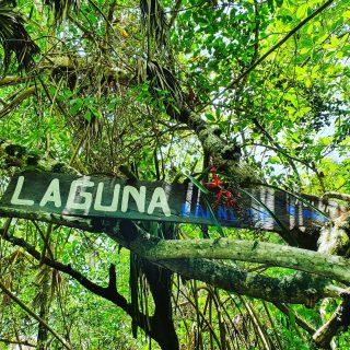 Weg zur Lagune Kaan Luum. Die Vegetation ist überwältigend. 🌿😍🌿 . . . #kaanluum #lagune #lagunakaanluum #laguna #nature #naturephotography #vegetation #entdecken #mexiko #reisefotografie #quintanaroomexico #martinasreisewelt