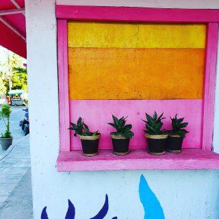 So ist der Look der Isla Mujeres. Farbenfroh, fröhlich und heiter, mit einem Schuss karibischer Gelassenheit.🙂😍🙂😍 . . . #islamujeresmexico #islamujeres #fenster #window #pink #orange #yellow #gelb #farbenfroh #fröhlich #heiter #karibik #mexikoreise #mexiko #entdecken #reisebloggerin #reiseblog #martinasreisewelt