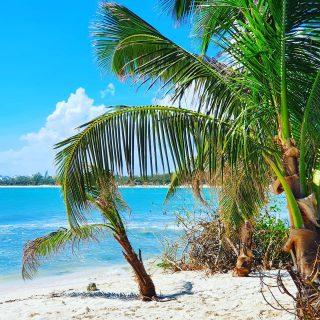 Playa Punta Esmeralda, Playa del Carmen. . . . #playapuntaesmeralda #puntaesmeralda #playadelcarmenmexico #playadelcarmen #playa #beach #beachlife #strand #palmen #vitaminsea #mexiko #mexico #entdecken #traumhaft #travelblogger #reisebloggerin #reiseblog #instabeach #instanature #martinasreisewelt